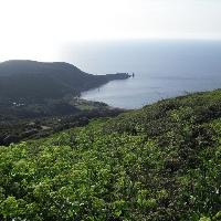 Insel Giglio Cala degli Alberi