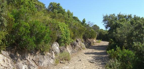 sentieri isola del Giglio