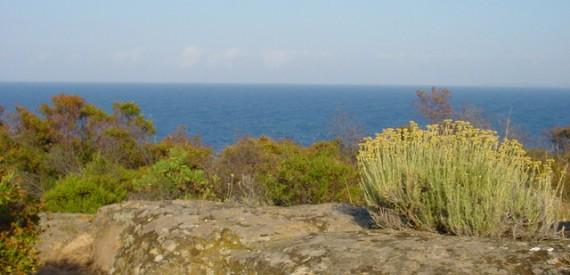 sentieri isola del Giglio: la strada delle Pietraie