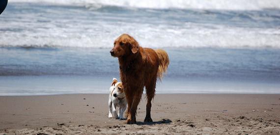isola del Giglio cani in spiaggia